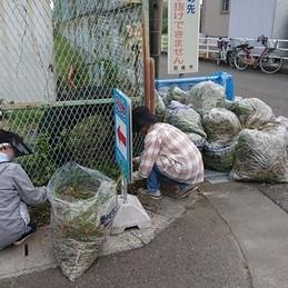 福寿町の老人クラブが学校周辺の環境整備を行ってもらいました!